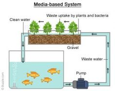 Water Quality Is Most Important For Aquaponics