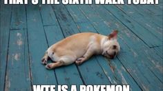 Pokémon Go has spawned an onslaught of hilarious memes all over the Internet. Here are 10 funny Pokemon Go Memes you have to see! Dog Pictures, Animal Pictures, Funny Pictures, Caption Pictures, Animals Photos, Tierischer Humor, Tech Humor, Ecards Humor, Nurse Humor