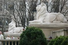Patience and Fortitude, the lions flanking the steps and entrance to the NY City Public Library.