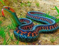 Beautiful snake!!! Harmless too.