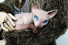BJD cat 9cm #2 | von BJD Pets (pets.evethecat.com)