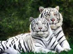 Resultado de imagem para animais lindos