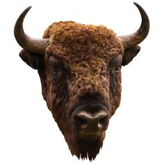 for your pantry.  just kidding.   American Bison |Adhesive Taxidermy Wall Decals | Walls Need Love