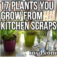 Plants and Gardening FYIs: And how many of these plants have you tried growing from kitchen scraps? Thanks, in5d, for the ideas and the instructions!