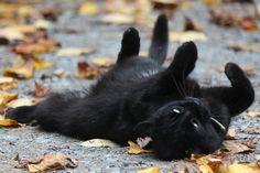 http://falling-through-autumn.tumblr.com/post/129600347353
