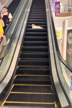 The Dog Comes And Enjoy The Elevator Everyday Dogs Funnydogs Der Hund Kommt Und Genießt Den Aufzug - Besondere Tag Ideen Funny Dog Videos, Funny Animal Memes, Dog Memes, Funny Animal Pictures, Cat And Dog Videos, Cute Funny Dogs, Cute Funny Animals, Cute Baby Animals, Funny Cats