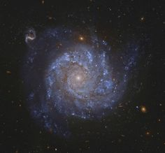NGC Spiral Galaxy and Friends Image Credit: Hubble Legacy Archive, ESA, NASA; Processing - Jeff Signorelli Explanation: A gorgeous spiral galaxy some 100 million light-years distant, NGC 1309 lies on the banks of the constellation of Hubble Space Telescope, Space And Astronomy, Nasa, Cosmos, Astronomy Pictures, Spiral Galaxy, Hubble Images, Friends Image, Star Cluster