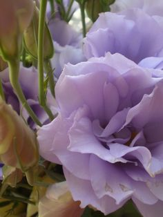 let your body love lisianthus