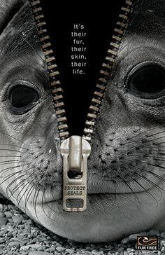 No Fur! - Don´t buy fur. You´re not a caveperson / No compres piel. No eres un ser de las cavernas