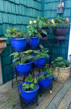 My Begonia corner on the farmhouse deck  - these were started in our little farm greenhouse the second week in April '16 - did you know it takes a begonia bulb about 45 days to start flowering ?