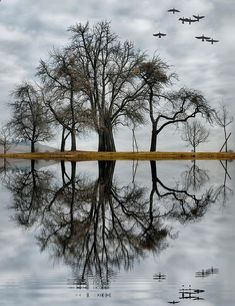 reflection - Nature Is Beautiful