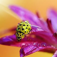 .. ❤️.. Isn't it Amazing, the colors God gave to his creations. - Ladybug.. ❤️ ..