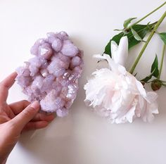 The gentle lavender drusy of the Cactus Quartz from Magaliesberg .