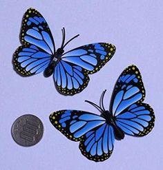「蝶々」の画像検索結果