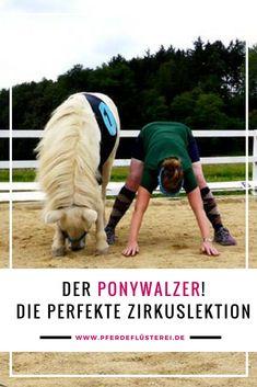Zirzensik beim Pferd - Ponywalzer und andere Übungen - Zirkuslektionen mit Pony und Pferd