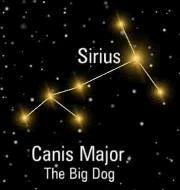 "mind=blown. sirius is the brightest star in the sky but also in the ""big dog"" constellation....like sirius black, whos animagus is a dog..."