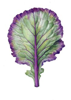 style, couleurs - Watercolour inspiration - Flowering Kale - Original Botanical watercolor 8 x 10 Watercolor Fruit, Watercolor Leaves, Watercolor And Ink, Watercolor Paintings, Watercolors, Illustration Botanique, Illustration Art, Illustrations, Botanical Drawings