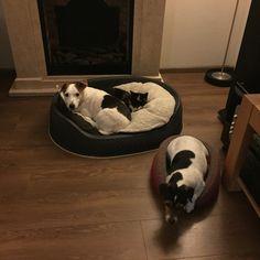 Max, Pip en Bo!