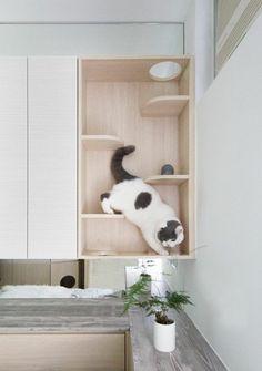 Brilliant Micro Apartment Design Ideas For Cozy Living 30 – Home Design Animal Room, Residential Interior Design, Diy Interior, Contemporary Interior, Residential Lighting, Interior Colors, Interior Paint, Luxury Interior, Kitchen Interior