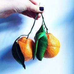 """""""stem + leaf citrus """""""