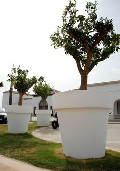 Giant Garden Pots Vijg witte pot grijze bestrating arch inter diz pinterest new garden plantpot workwithnaturefo