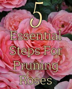 roses garden care Learn how to prune your roses in five easy steps with this helpful care article. Rose Bush Care, Rose Care, Gardening For Beginners, Gardening Tips, Container Gardening, Pruning Roses, Transplanting Roses, Rose Plant Care, Plants That Attract Butterflies