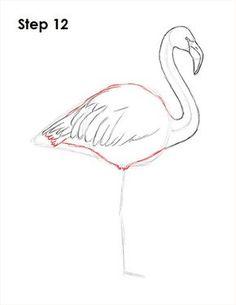 Flamingo Bird Drawing 12