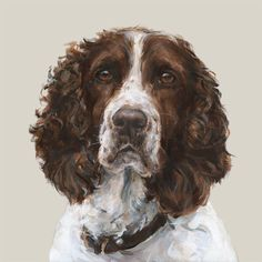 German Spaniel Dog 100 Hand Painted Oil Painting on Canvas No Frame Unusual Dog Breeds, Big Dog Breeds, Spaniel Dog, Springer Spaniel, Asian Dogs, Dog Organization, Puppy Drawing, Cool Dog Houses, Best Dog Toys