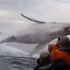 whale watching experience turns into a water ride! - whale watching experience turns into a water ride! Wildlife Nature, Nature Animals, Animals And Pets, Strange Animals, Nature Nature, Funny Animal Videos, Cute Funny Animals, Cute Baby Animals, Beautiful Sea Creatures