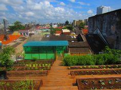 Taís Paranhos: Telhado orgânico