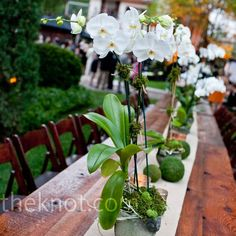 Tall phalaenopsis orchids dotted the burlap runners on the banquet tables.