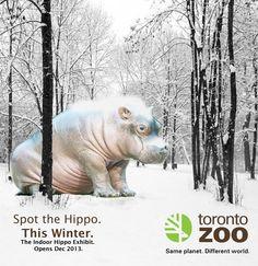 TZ campaign idea1 Toronto Zoo, Hippopotamus, Campaign, World, Animals, The World, Animales, Animaux, Animal