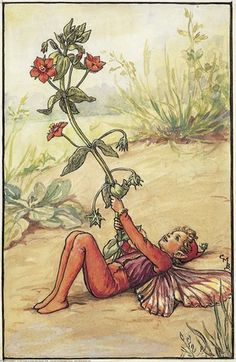 Illustration for the Scarlet Pimpernel Fairy from Flower Fairies of the Summer. A boy fairy lies on the ground on his back holding a pimpernel flower in the air.  										   																										Author / Illustrator  								Cicely Mary Barker