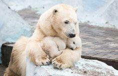 Polar Bear and her baby