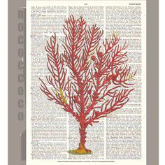 Red CORAL1 -ARTWORK  printed on Repurposed Vintage Dictionary page 8 x 10 -Upcycled Book Print