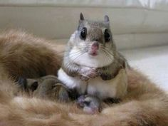 Flying squirrel with babies