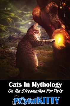 Did you see our Cats in Mythology stream on the Streamathon For Pets? Maine Coon, Pet Health, Cat Gif, Health And Safety, Cat Toys, Cool Cats, Cats And Kittens, Mythology, Picture Video