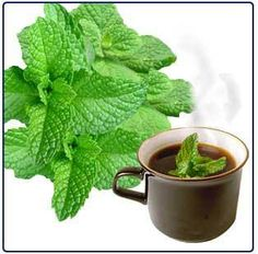 Benefits of using fresh mint leaves in our daily diet is manifold. - Green Yatra Blog