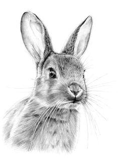 Excelente dibujo de un tierno conejito