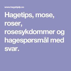 Hagetips, mose, roser, rosesykdommer og hagespørsmål med svar.
