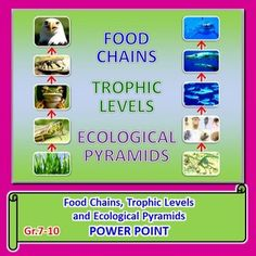 FOOD CHAINS, TROPHIC LEVELS AND ECOLOGICAL FOOTPRINTS POWERPOINT:  This fully editable PowerPoint.  TOPICS: food chains, producers, plants, phytoplankton, terrestrial and aquatic food chains, consumers, primary, secondary, tertiary and quaternary consuemrs, top carnivores, decomposers, detritus, nutrients, hydrothermal vents, chemoautotrophic bacteria, sulfides, humans and food chains, trophic levels, energy loss in food chains, pyramid of energy, pyramid of biomass, pyramid of numbers
