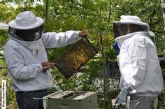 new hive-checking brood battern.jpg (1500×996)