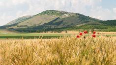 Măcin Flora And Fauna, Mountain Range, Romania, Mountains, Green, Outdoor, Beautiful, Outdoors, Outdoor Living