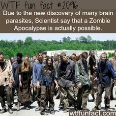(Mike Bundrant) Of course modern, mush-for-brains, walking dead zombies do not think they are victims of a zombie apocalypse. Part of slipping into zombie-dom is missing t… The Walking Dead Saison, Walking Dead Zombies, Walking Dead Season, Walking Dead Facts, Wtf Fun Facts, True Facts, Funny Facts, Random Facts, Random Stuff