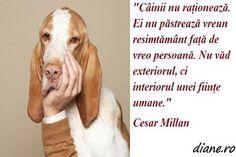 Aceste citate, maxime, aforisme, cugetări nu reflectă numai stereotipul potrivit căruia câinele este cel mai bun prieten al omului, ci și n...