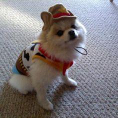 He's mamas cowboy!
