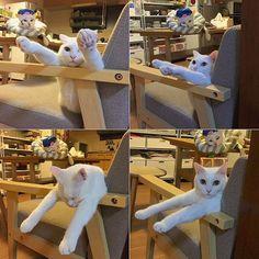 やる事いっぱいあるのに、ついつい遊んでまう…❤︎ 自分がさかなクンになってる事に気づいてないハッチャンw #八おこめズラ #八おこめ #ねこ部 #cat #ねこ