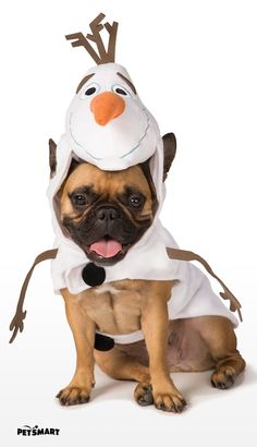 We're all smiles when it comes to our pawesome collection of #Halloween costumes!