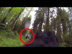 Dog Captures Bigfoot on GoPro - YouTube