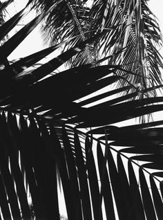 black and white, palm trees, and nature image Palm Trees Tumblr, Wow Photo, Am Meer, Jolie Photo, Black And White Photography, Monochrome, Art Photography, Surfing, Artwork